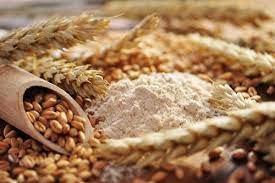 Giá ngũ cốc xuất khẩu của Ukraine giảm trong tuần qua