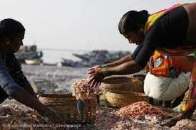 Hàng loạt công ty thủy sản Ấn Độ bị đình chỉ xuất khẩu sang Trung Quốc  do phát hiện COVID-19