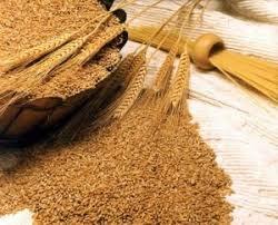 Giá ngũ cốc thế giới hôm nay 24/6: Lúa mì, ngô và đậu tương cùng giảm