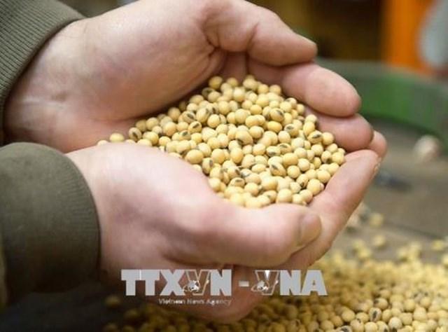 FAO và OECD dự báo giá các mặt hàng lương thực chính sẽ giảm trong thập kỷ tới