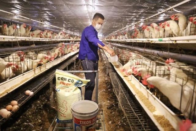 Không tự chủ được về con giống, thức ăn, ngành chăn nuôi khó phát triển bền vững