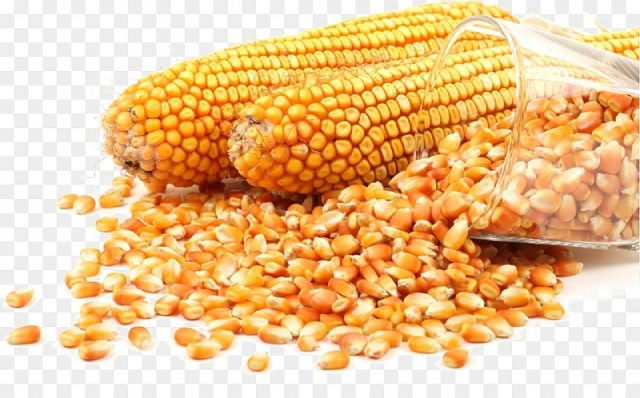 Thức ăn chăn nuôi tăng giá mạnh, Bộ Tài chính đề xuất giảm thuế nhập khẩu ngô và lúa mì