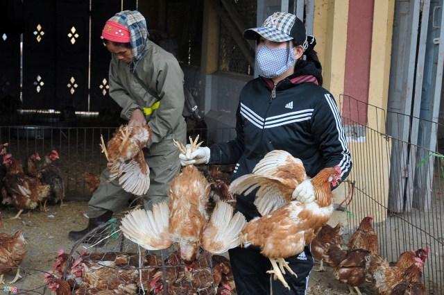 Tết âm lịch 2022 có thể xảy ra khủng hoảng thiếu thực phẩm gia cầm