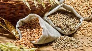 Giá ngô và đậu tương ngày 10/8 giảm do thời tiết có mưa