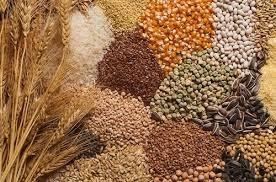 Giá ngũ cốc ngày 17/8 đồng loạt tăng