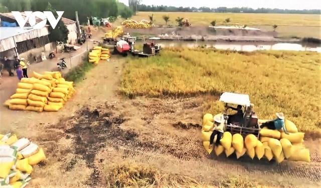 """Kiến nghị mở """"luồng xanh"""" cho vận tải đường thủy tiêu thụ lúa gạo ĐBSCL"""