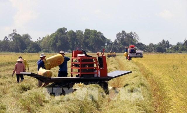Dồn lực giúp nông dân tiêu thụ nhanh nông sản