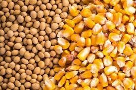 Giá ngũ cốc hôm nay 1/9: Lúa mì giảm do lo ngại về nhu cầu