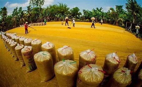 Hàn Quốc mở thầu mua hơn 42.000 tấn gạo
