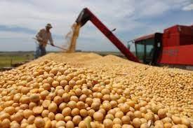Doanh số bán đậu tương niên vụ 2020/21 của Argentina đạt 28,9 triệu tấn