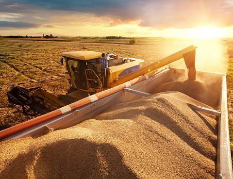 Dự báo thời tiết thuận lợi cho các vụ thu hoạch ngô và đậu tương của Mỹ