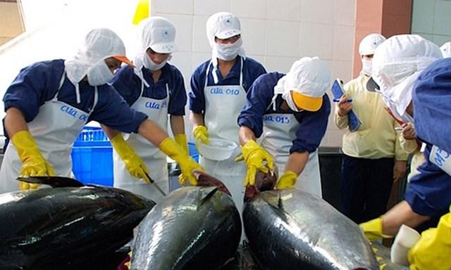 Xuất khẩu cá ngừ sang châu Âu: Thị phần lớn song hành cùng thách thức