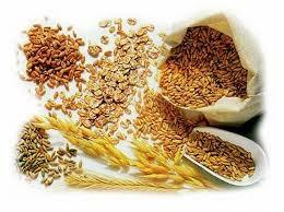Giá ngũ cốc hôm nay 1/10: Lúa mì đạt mức cao nhất gần 3 tuần
