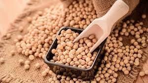 Giá ngũ cốc hôm nay 12/10: Đậu tương giảm xuống mức thấp nhất trong 10 tháng