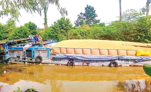 Cơ hội mới cho xuất khẩu gạo