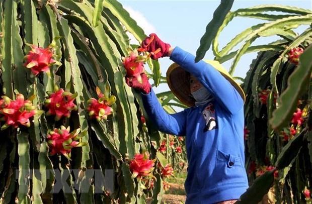 Việt Nam-Ấn Độ có tiềm năng lớn trong hợp tác xuất khẩu nông sản