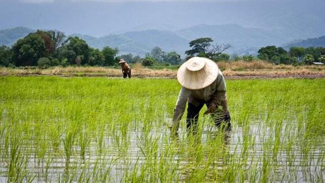Thái Lan đưa ra kế hoạch thực hiện RCEP