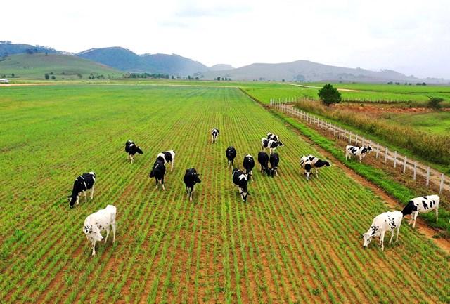 Những khó khăn của ngành chăn nuôi thế giới hiện nay
