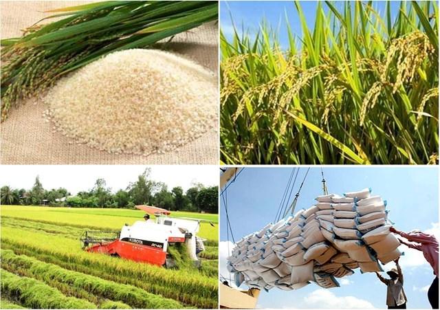 Thị trường lúa gạo ngày 23/5: Giá gạo trong nước ổn định