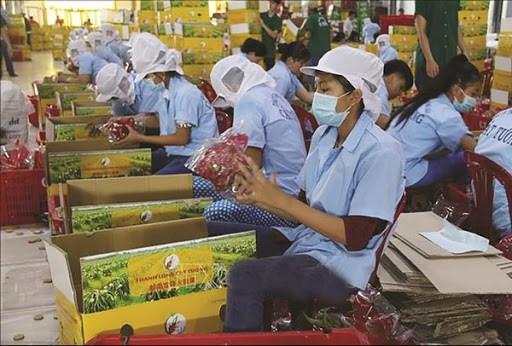 Cục Xuất nhập khẩu chỉ đạo tạo thuận lợi khi cấp C/O cho nông sản xuất khẩu