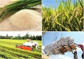 Giá lúa gạo hôm nay 28/5: Gạo trong nước ổn định