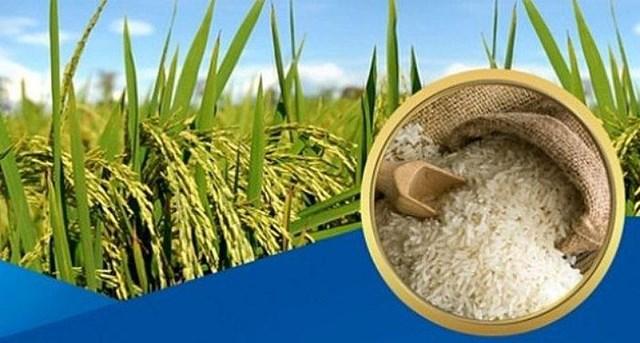 Giá lúa gạo tuần kết thúc 26/6: Gạo nguyên liệu tăng nhẹ