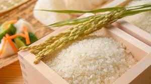 Giá lúa gạo hôm nay 1/7: Tiếp tục ổn định