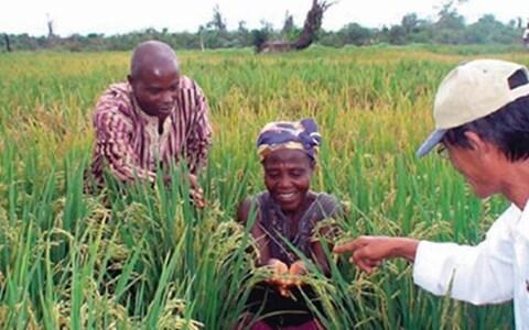 Hỗ trợ doanh nghiệp khai thác thị trường Châu Phi