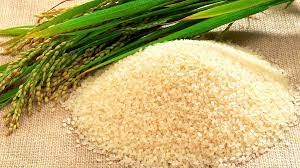 Giá lúa gạo hôm nay 26/7: Gạo nguyên liệu ổn định