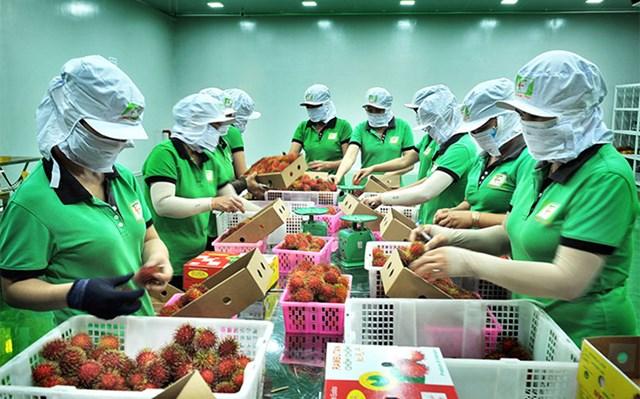 Hoa Kỳ sẽ không ban hành bất kỳ biện pháp hạn chế thương mại nào đối với hàng hóa XK của Việt Nam