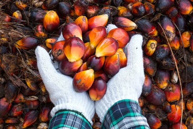 Indonesia điều chỉnh thuế xuất khẩu các sản phẩm dầu cọ