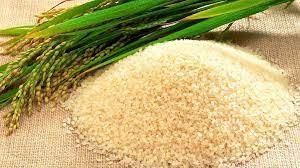 Giá lúa gạo hôm nay 3/8: Gạo nguyên liệu giảm