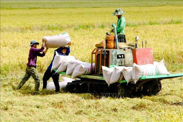 Đề xuất thu mua tạm trữ lúa Hè Thu