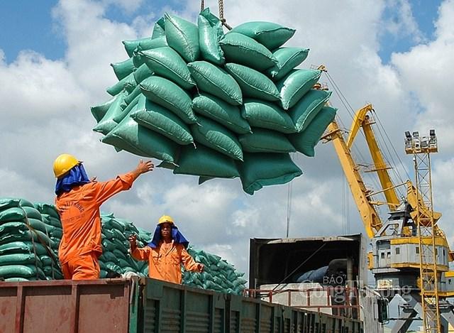 Gỡ khó cho doanh nghiệp xuất khẩu gạo