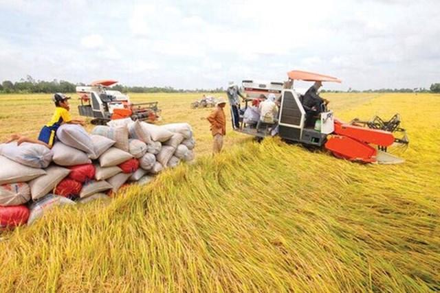 Bộ Công Thương kiến nghị Chính phủ tạo thuận lợi tiếp cận nguồn vốn thu mua thóc, gạo hàng hoá