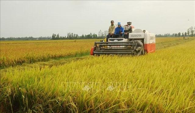 """Bộ Công Thương kiến nghị mở """"luồng xanh"""" cho vận tải đường thủy để tiêu thụ lúa gạo ở các tỉnh ĐBSCL"""