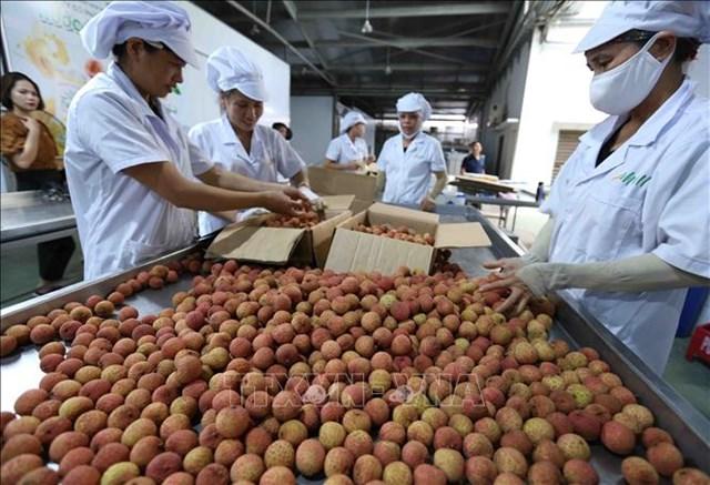 Nông sản Việt vươn xa bất chấp đại dịch
