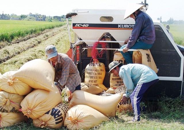 Liên kết vùng để tăng cường tiêu thụ lúa gạo