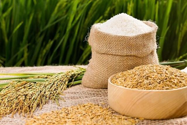 Giá lúa gạo hôm nay 29/9: Gạo nguyên liệu giảm