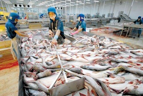 Trung Quốc là thị trường XK cá tra lớn thứ 3 của Việt Nam