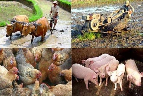 Vốn đầu tư vào nông nghiệp còn ít
