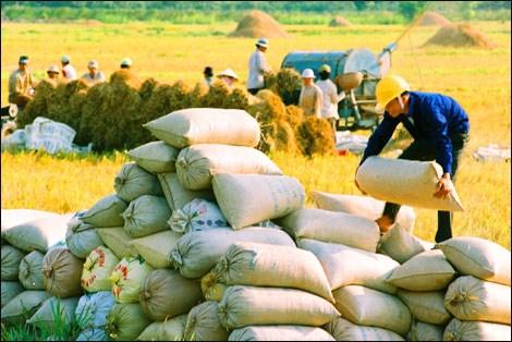 Xuất khẩu gạo tăng giá