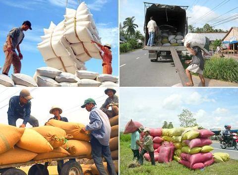 Cơ cấu gạo xuất khẩu chuyển biến tích cực