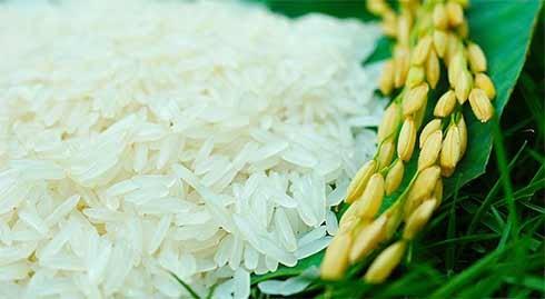 Giảm mạnh chỉ tiêu xuất khẩu gạo, khó có thể đạt 6 triệu tấn