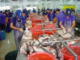 Xuất khẩu thủy sản sang các thị trường chính ở Châu Phi, Tây Á, Nam Á