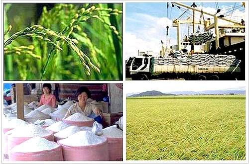 Tháng 7 xuất khẩu gạo thấp nhất từ đầu năm đến nay