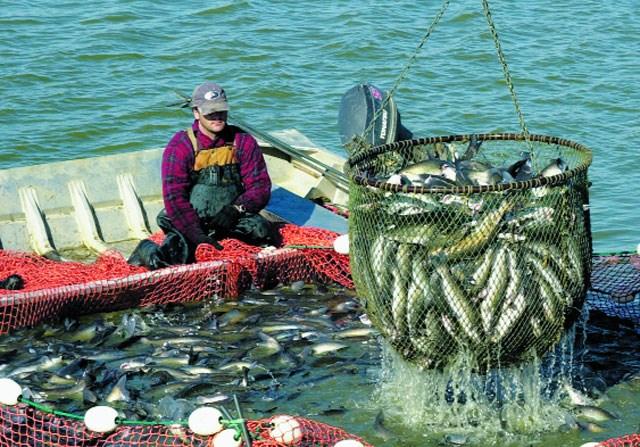Xuất khẩu thủy sản 7 tháng đầu năm và những dự báo