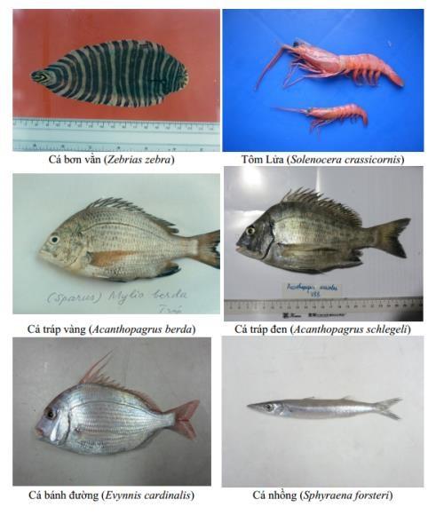 Không khai thác hải sản tầng đáy từ Hà Tĩnh đến Thừa Thiên Huế