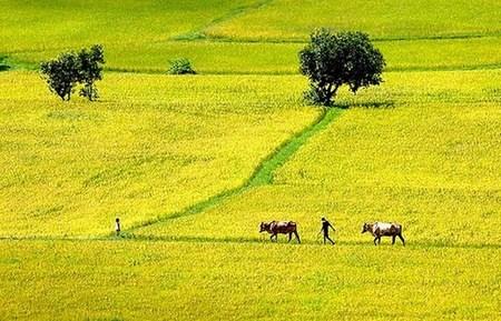 Quốc hội cho phép miễn thuế sử dụng đất nông nghiệp 4 năm