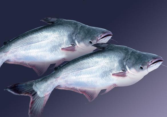 Sản lượng cá thịt trắng toàn cầu dự kiến đạt 12 triệu tấn năm 2020